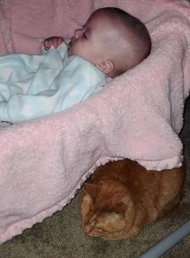 Котик притворялся, что не любит дочку владельцев, но случайно открылась правда
