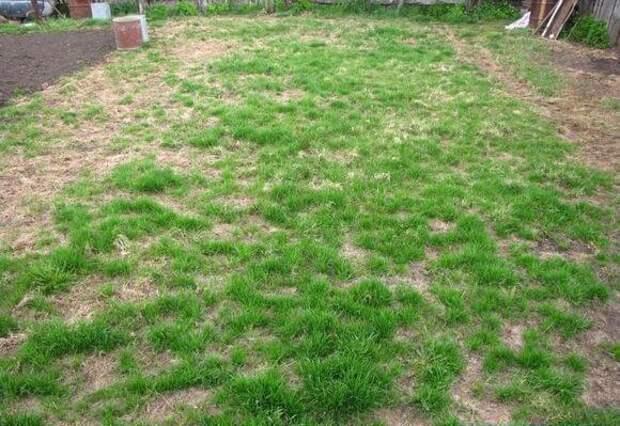 Что делать с газоном после схода снега