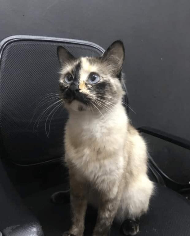 Кошка, которая спасла малыша