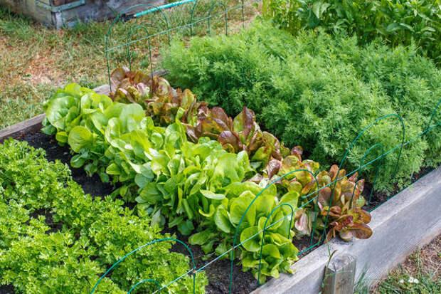 Как умно обустроить свой огород?