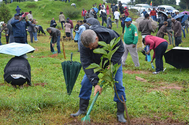 В Эфиопии побили мировой рекорд, посадив 350 миллионов деревьев за 12 часов