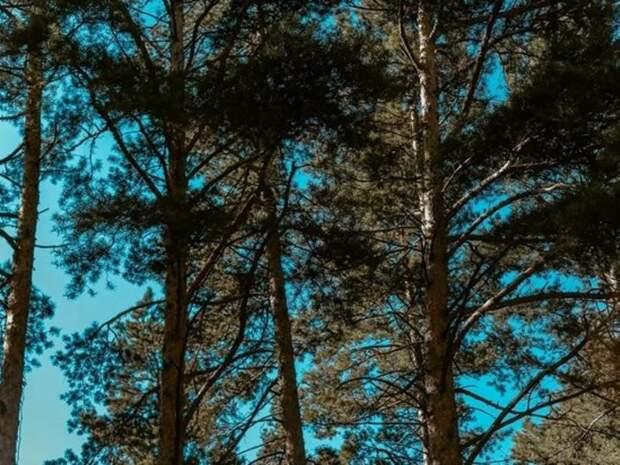Незаконную древесину в Забайкалье будут определять по стволам и пням