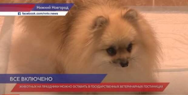 В Госветклиниках  Нижнего Новгорода  работают гостиницы для домашних животных