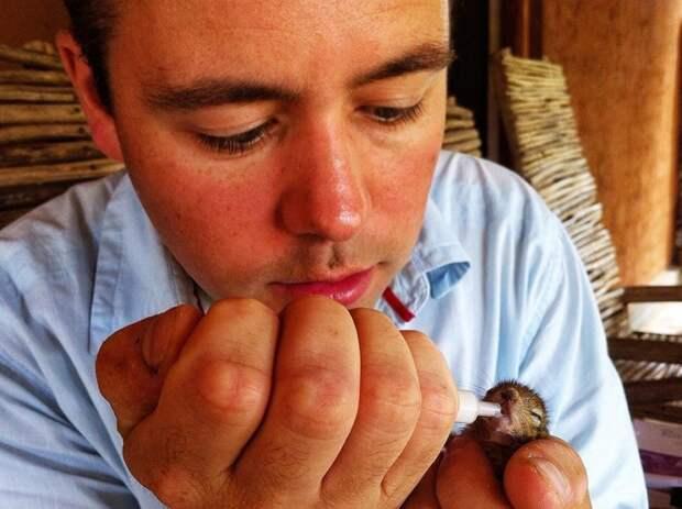 Осиротевший, бельчонок, Роб, BBC Wildlife, Пол Уильямс, режиссёр,животные