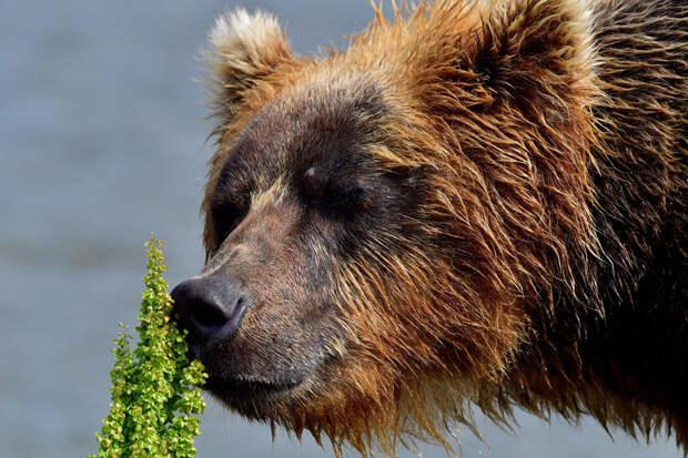 Как я видел медведя