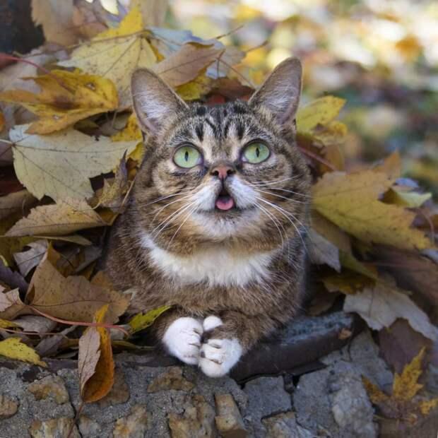 10 милых фото кошечки Лил Баб с высунутым языком