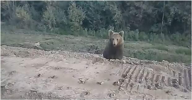 Молодой медведь атаковал пытавшихся покормить его людей