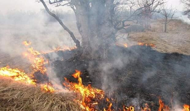 В одном из районов Оренбуржья прогнозируется пятый класс пожарной опасности
