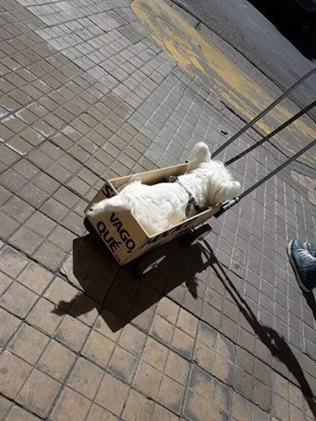 Понурого пса тащили в ящике со странной надписью...