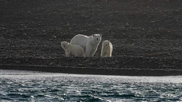 Впечатления от экспедиции: «Роснефть» презентовала Арктический атлас