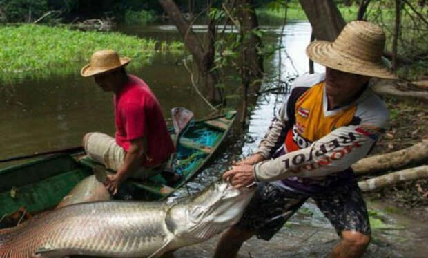 7 опасных созданий Амазонки: обитатели мутных вод реки