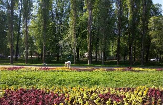 275 тысяч цветов украсят улицы Автозаводского района к 800-летию города Нижнего Новгорода