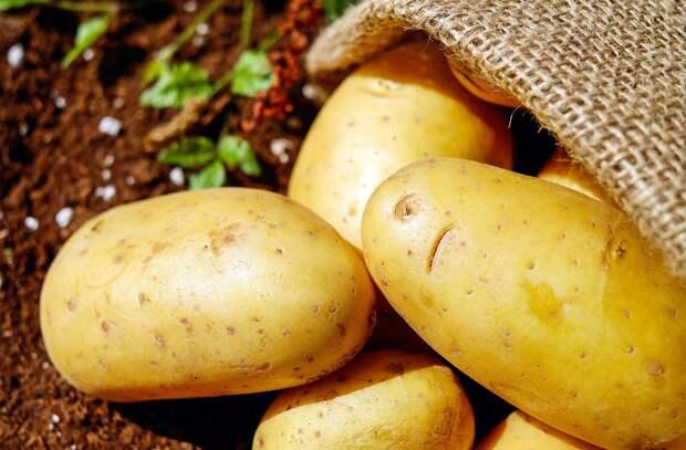 В Крыму почти на 60% увеличилось производство овощей