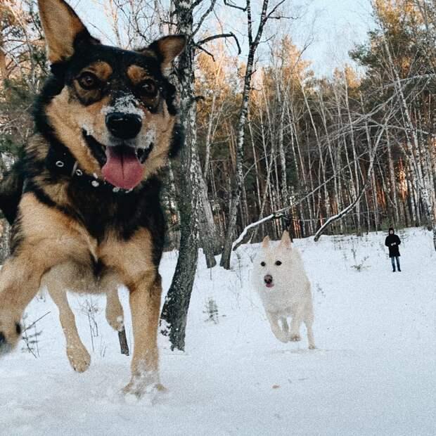 собаки в парке