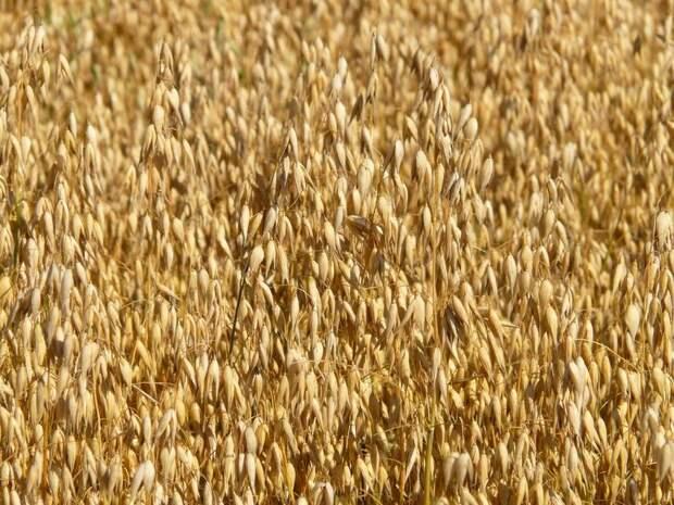 Чтобы земля отдохнула: как посеять сидераты