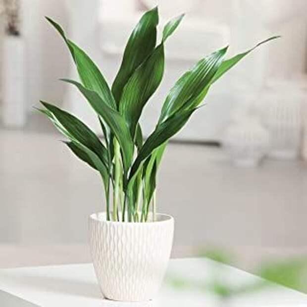 10 самых неприхотливых растений для вашего дома