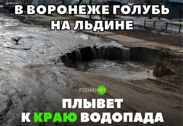 В Воронеже голубь на льдине плывет к краю водопаду Подборка автомобильных приколов