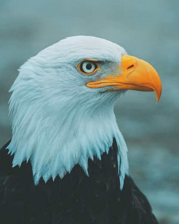 Природа и животные на снимках Шарли Савели