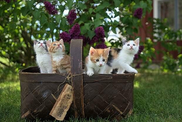 Дикий котяра или домашний мурлыка: если бы вы были котом, то каким?