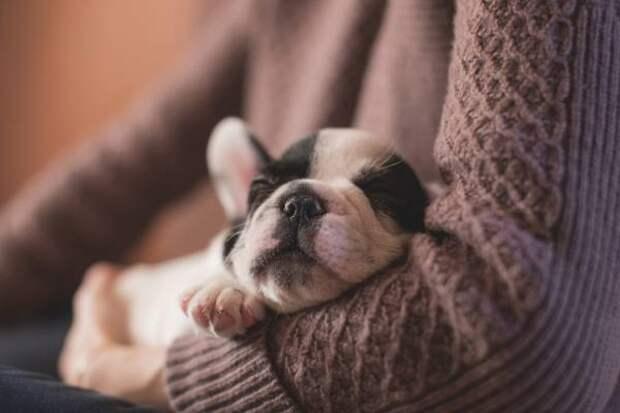 Пока вы спали: законопроект об учете домашних животных и применение истребителей в Арктике