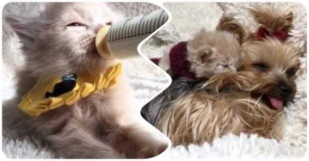 Осиротевшие котята нуждались в маме - и её заменила добрая собака интересное, кошки, собаки, спасение