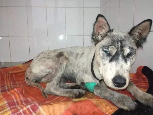 Пес был весь испачкан в битум и не мог двигаться, волонтеры спасли ему жизнь