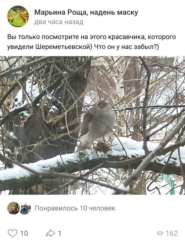 Фото дня: на Шереметьевскую прилетел сокол