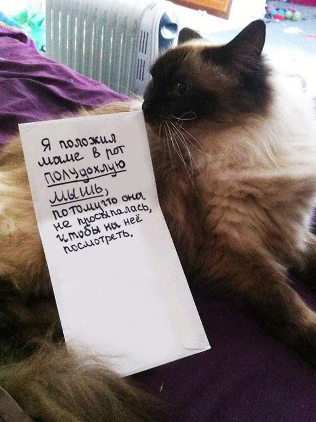 Котики, которые очень провинились