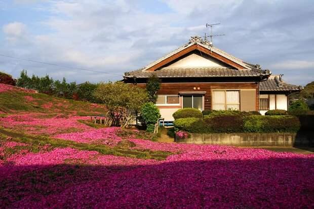 Для жителей Лианозова организовали онлайн-путешествие по цветочному японскому саду