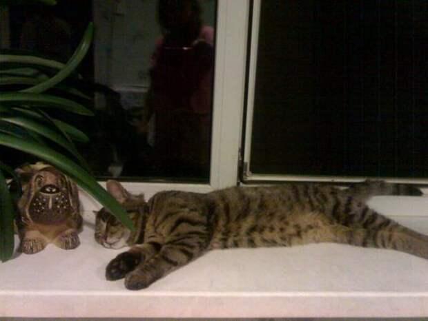 Как кот спас котёнка, привел домой и оставил вместо себя