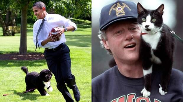 Индюки, еноты и медведи: любимые питомцы президентов США