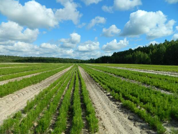 Нижегородская область вошла втоп-10 российских регионов— лидеров поэффективности использования леса