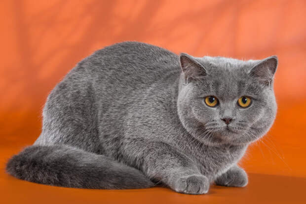 Какая кошка – такая и хозяйка