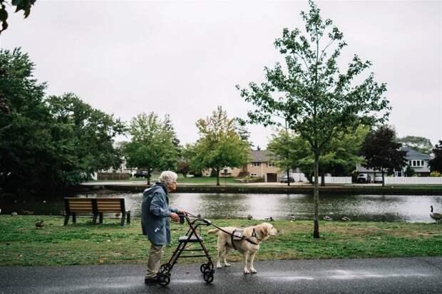 После знакомства с ним она перестала бояться выйти из дома ветеран, друг, пес, пожилой, служебная собака