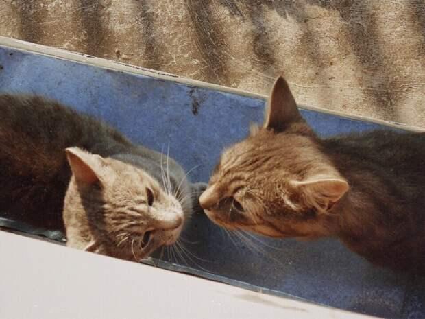 Любовь Хвостатые, братья наши меньшие, город, кот, кошка, улица, уличные кошки, эстетика