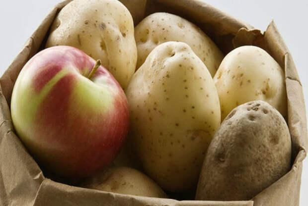 Хранить картофель.   Фото: Информагентство «Апрель».