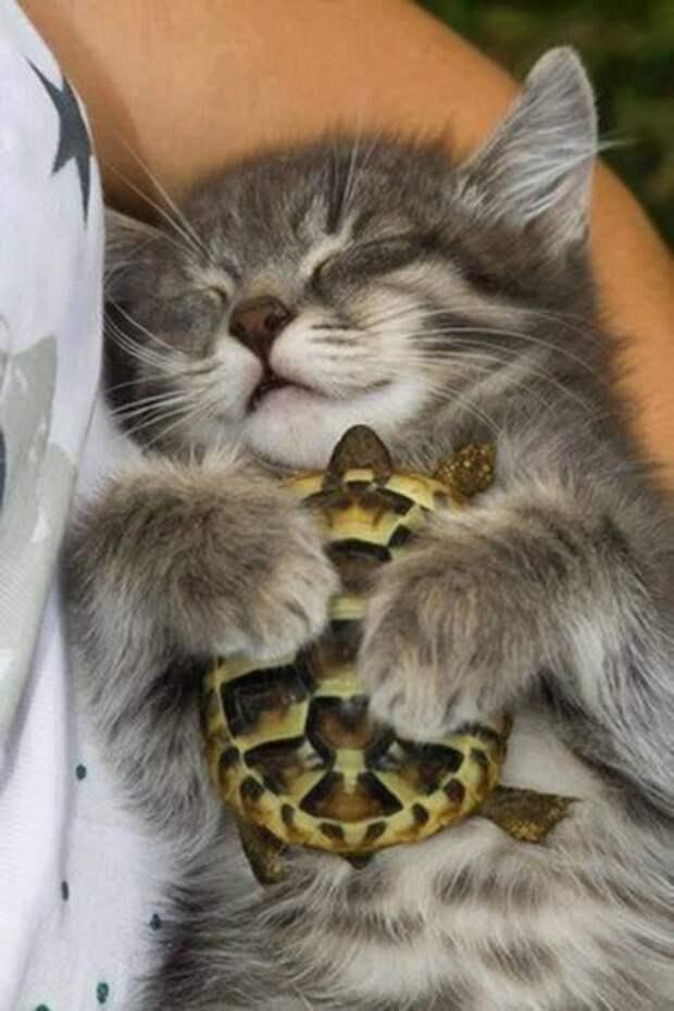 15 милейших фото, на которых животные выражают нежные чувства друг к другу