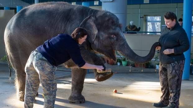 Торгово-промышленная палата РО опровергла свою причастность коценке слоненка Эколь