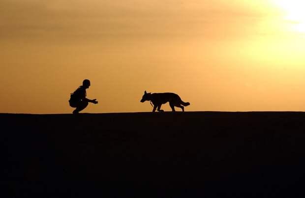 Собака напугала ребенка на берегу Яузы