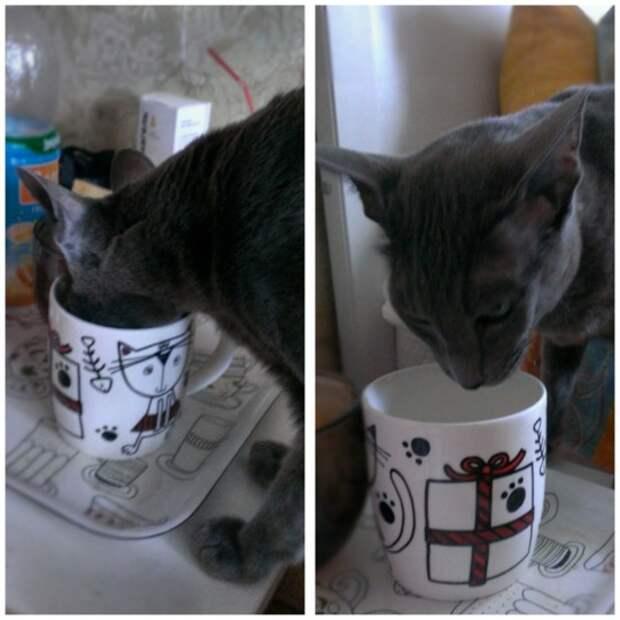 Молоко вкуснее из хозяйской чашки