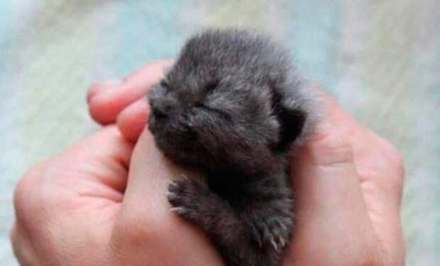 Женщина спасла серого котенка, но цвет его шерсти начал меняться