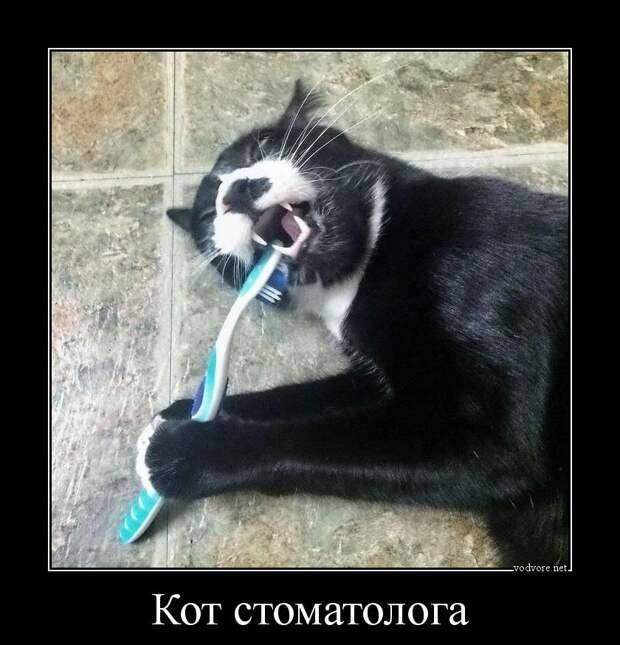 Байки про котов 8
