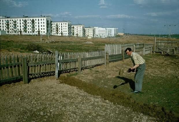 Огород на окраине Москвы дин конгер, фото, фотограф