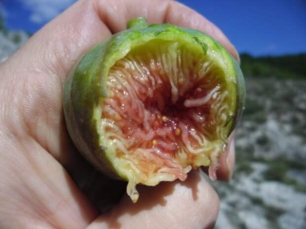 12 продуктов, которые растут совсем не так, как вы представляли