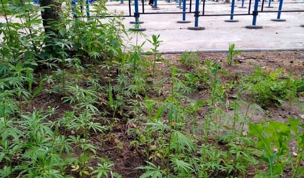 Власти Челнов заинтересовались парком, где горожане нашли коноплю
