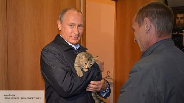 Собачье дело: как президентские поправки позволят решить вопрос контроля за животными в РФ