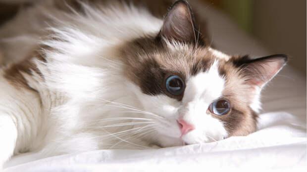Ученые описали случай, когда котенка с COVID-19 пришлось усыпить