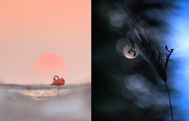 Завораживающие снимки победителей конкурса фотограф года WildArt 2021: Магия дикой природы