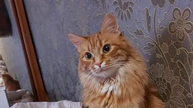 В Хорошёво-Мнёвниках ищут рыжего кота, убежавшего на улице Демьяна Бедного