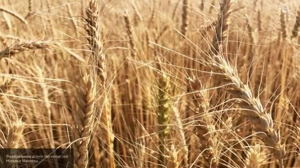 Россия диктует свои условия на рынке зерна и готовится к сверхприбыли